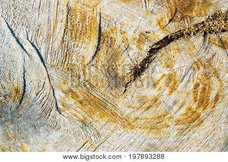 The Texture Of The Stump Of The Old Tree