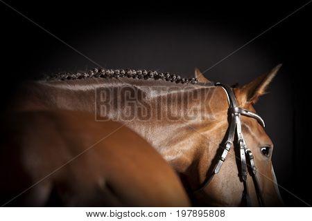 Horse Braided Mane