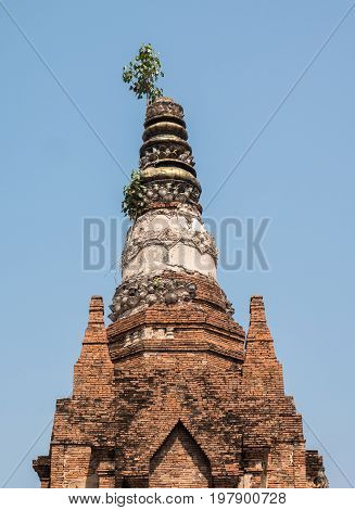 Ancient brick pagoda with the small tree on the pinnacle in the historical park.