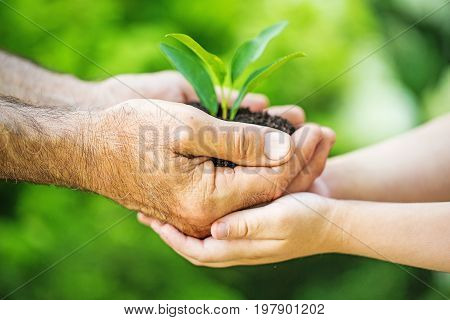 Green holding plant little hands beautiful romance