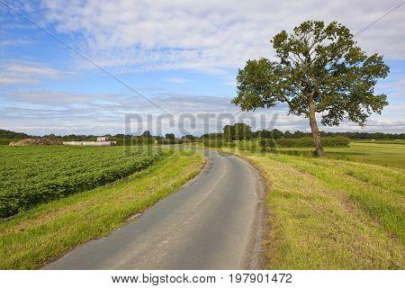 Rural Highway And Potato Crop