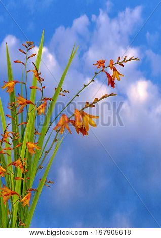 View of a wild orange flower on a cloudy blue sky