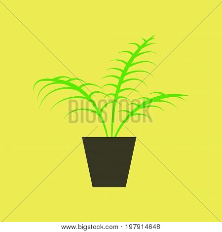 Icon in flat design Ficus home plant
