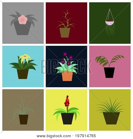 assembly of flat icons houseplants home plant