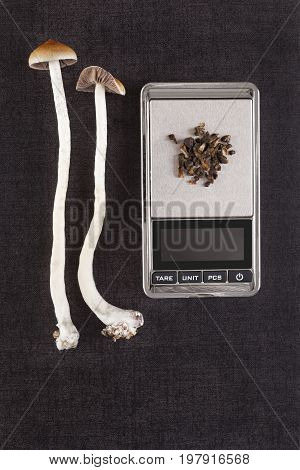 Fresh and dried psilocybin mushroom on digital pocket scale on black background top view. Psychedelic therapeutic use.