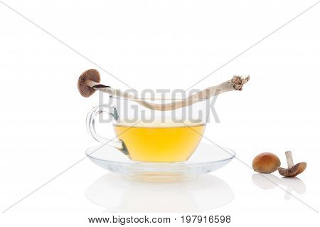 Psychedelic mushroom tea with fresh mushrooms isolated on white background. Alternative medicine natural remedy.