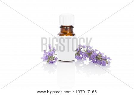 Fresh lavender aromatherapy lavender blossom extract in jar. Lavender essential oil in jar fresh lavender flower isolated on white background.