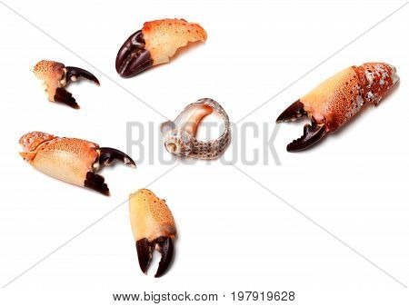 Cooked Pincers From Crab And Empty Broken Rapana Shell