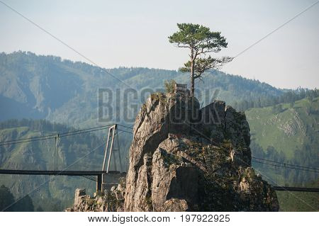 A lonely pine grows through the rocks