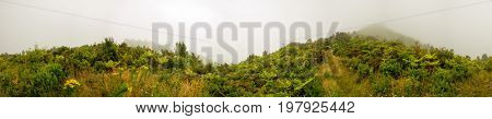 Fog in the jungle panorama
