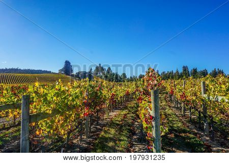 Anderson Valley Vineyards