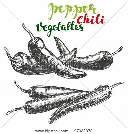 chili peppers vegetable set hand drawn vector illustration realistic sketch