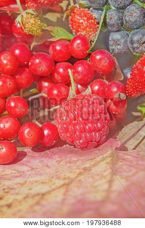 Delicious Fruit And Berry. Mixed Fresh Ripe Berries