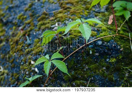 Green Plant On A Rock Covered With Moss.