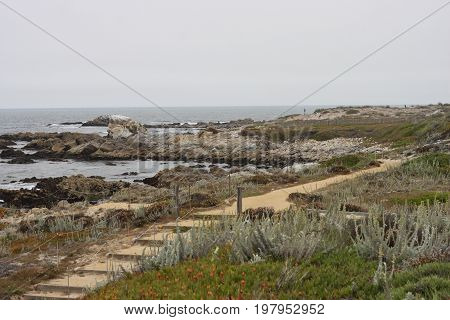 This is an image of a walking path on Asilomar State Beach taken on an overcast day in August.