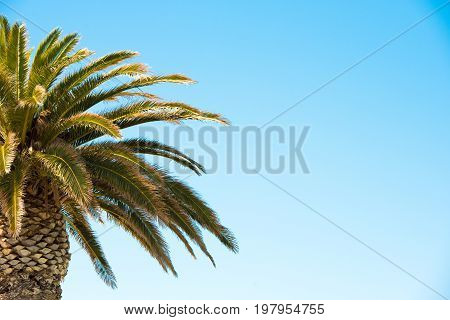 Palm Tree On Blue Sky Background. Close-up. Copy Space For Text.