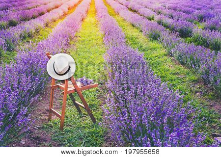 A chair with a hanged over hat an open book and a bunch of lavender flowers between the blooming lavender rows under the summer sunset rays. Dream and relax concept.