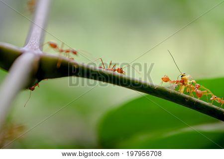 ant wildlife mavro on nature background .