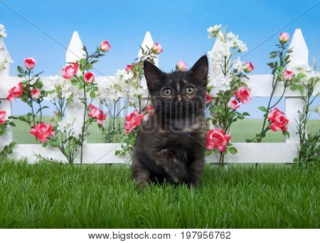 One small tortie tabby kitten sitting in green grass in front of a white picket fence with pink roses and white flowers looking directly at viewer