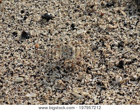 Sand crab hidden in the multi-color sandy beach of Hawaii.