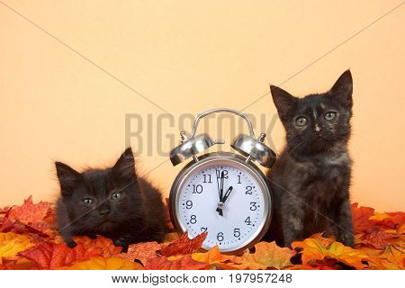 Two black kittens laying in autumn fall leaves on an orange background next to an old fashioned clock set for 1 o'clock AM for daylight savings. Fall back.