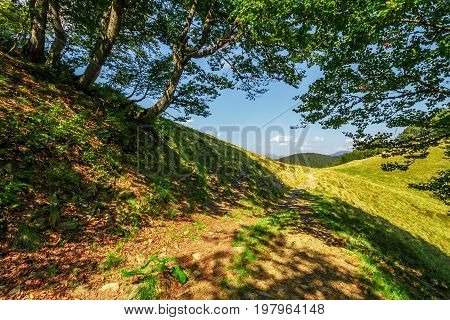 Footpath Through The Forest On Mountain Ridge