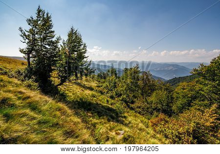 forest around the meadow on a steep mountain