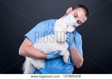Veterinary Holding Or Examining White Bichon Dog