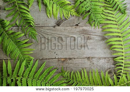 Frame from fern leaves on old unpainted wooden background with copy space. Border is all around. Place for text. Top view.