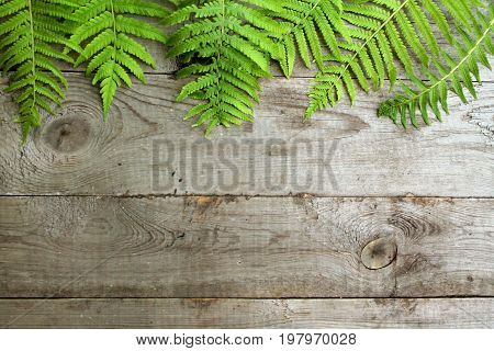 Frame from fern leaves on old unpainted wooden background with copy space. Border is top. Place for text. Top view.