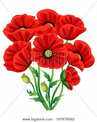 Red Poppy Flower isolated on white background. Vector red romantic poppy flowers and grass. red poppies. red flower. flourish flowery bunches design for decor Web site page and mobile app design