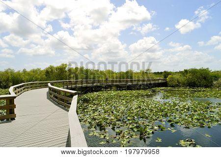 Anhinga Trail through the Everglades National Park in Florida