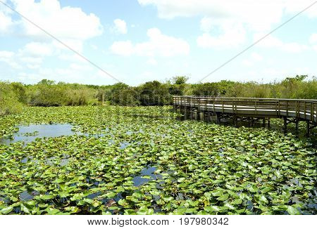 Anhinga Trail through the Everglades National Park in Florida