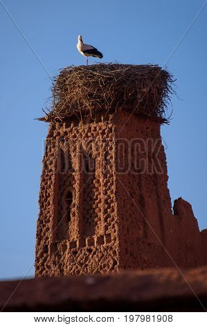 Stork On The Old Kasbah Tower, Morocco.