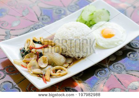 Thai food,Spicy stir fried squid with basil leave and cooked rice on white dish in restaurant