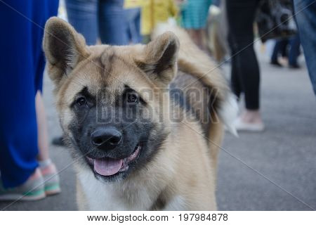 Lonely stray dog among human legs in a crowd in the street (selective focus on the dog eyes)