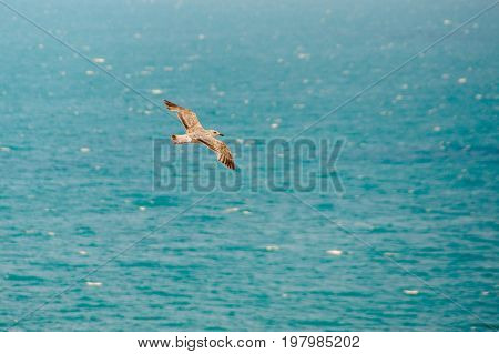 Top view of silhouette of flying seagull. Bird flies over the Sea. Free flight