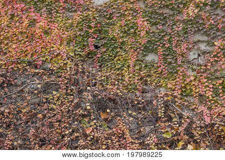 Autumn Leaves Wall