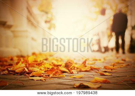 Fallen leaves on the sidewalk in city park