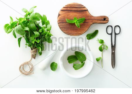 Composition with lemon balm on white background