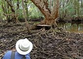 Taking pictures of awesome tree roots in the mangrove forest of Trat Province, Thailand poster