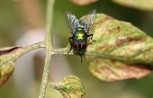 A green fly perched on a leaf poster
