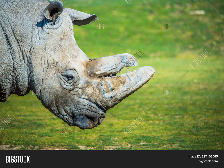 Big Rhino Zoo, Side Image & Photo (Free Trial) | Bigstock