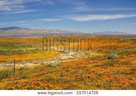 California High Desert Landscape With Blooming Wildflowers In Orange And Yellow, Wind Turbines And D