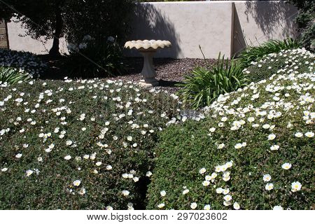 This Is An Image Of A Carmel, California Garden In Full Bloom In Early Morning April Sunshine.