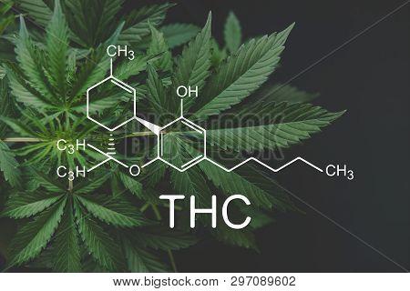 Thc Formula, Tetrahydrocannabinol . Cbd And Thc Elements In Cannabis,growing Marijuana, Despancery B