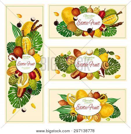 Exotic Natural Tropical Fruits Banners. Vector Organic Farm Market Jackfruit, Jabuticaba Or Morinda,