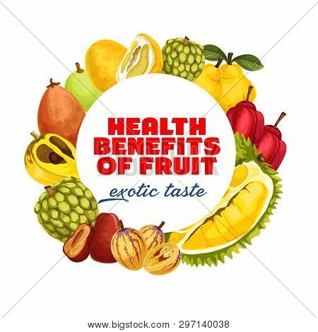 Exotic Tropical Fruits Harvest Of Tropic Durian, Cherimoya Or Sweetsops And Santol. Vector Banner Of