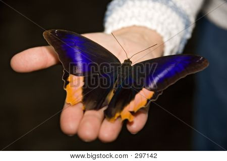 Insect 015 Butterfly Hand