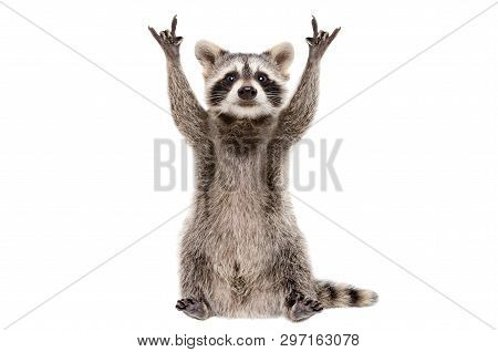 Funny Raccoon Showing A Rock Gesture Isolated On White Background